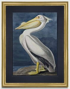The Antiquarium - Antique Print & Map Gallery - John James Audubon Fine Art Prints, Framed Prints, Birds Of America, New York Museums, John James Audubon, Antique Prints, Natural History, Watercolor Paper, American Art