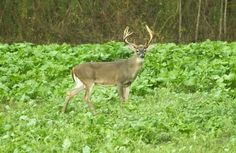 4 Ways To Bring The Deer To You