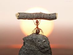inner strength, god, dream, weight loss, sunset, animal totems, ants, photography, design