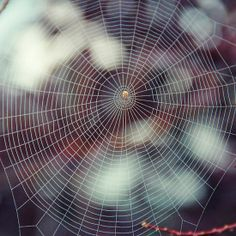 Oh what a tangled web we weave by Laura-Lise Wong on Redbubble Spider Art, Spider Webs, Beautiful Nature Scenes, Nature Images, Dark Beauty, Natural Forms, Love Art, Tangled, Mother Nature
