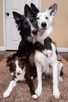 Super Cute Puppies, Cute Baby Dogs, Cute Dogs And Puppies, Pet Dogs, Pets, Doggies, Pet Puppy, Cute Animal Photos, Cute Animal Pictures