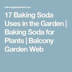 17 Baking Soda Uses in the Garden   Baking Soda for Plants   Balcony Garden Web