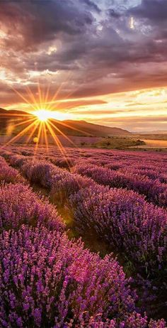 imagine this as hair color ♥ --Incredible sunset looking across lavender field. imagine this as hair color ♥ --Incredible sunset looking across lavender field. Amazing Photography, Landscape Photography, Nature Photography, Scenic Photography, London Photography, Night Photography, Landscape Photos, Photography Tips, Fashion Photography