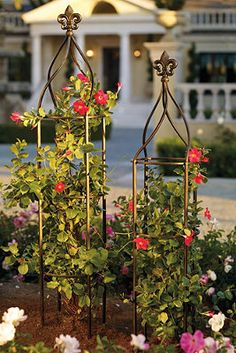 Trellises add a whimsical and beautiful touch to your landscape!