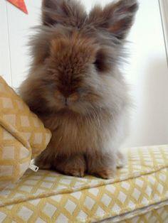 Bunny sits pretty - July 16, 2012