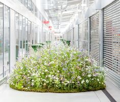 Carly Rogers' floral mound installation for British Flowers Week 2017 at New Covent Garden Flower Market Hydroponic Gardening, Hydroponics, Organic Gardening, New Covent Garden Market, British Wild Flowers, Rogers Gardens, Meadow Flowers, Beautiful Flowers Garden, Arte Floral