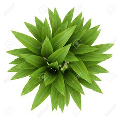 Plants Top View Png
