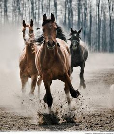 A horse loves freedom, and the weariest old work horse will roll on the ground or break into a lumbering gallop when he is turned loose into the open. _Gerald Raferty