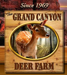 Deer Farm & Petting Zoo in Williams AZ by Grand Canyon Railroad Rt. 66 Gifts & Souvenirs About Us