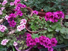 Plants, Planters, Plant, Planting