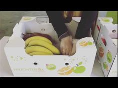 Vorbereitung Früchtebox Box, Plastic Cutting Board, Snare Drum, Boxes