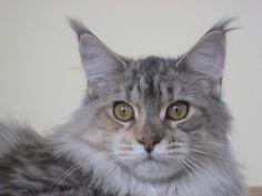 CATS - FEMALE