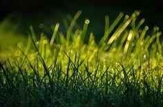 https://flic.kr/p/PoBQUC | Cool frozen grass