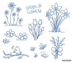 Vektor: Spring and summer flower collection, with tulips, narcissus, singing bird on a pussy willow brach, marguerite, butterflies and bee. Hand drawn vector illustration.