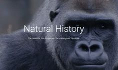 Natural History on Google Arts & Culture – MAGAZINE OMNITRAVEL