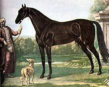 Turkoman horse - Wikipedia, the free encyclopedia; The Byerley Turk, one of the progenitors of the Thoroughbred breed, may have been a Turkoman horse