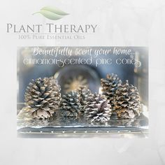 Mandi Ehman from Life Your Way gives us another easy, fast and awesome idea!! Earlier this fall - my children and I went on a nature walk. We accumulated a few pinecones and other odds and ends. Th...