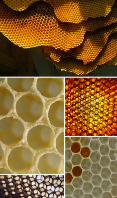 I chose this group of pictures because it is linked to the environment in an ordered way. although the hive was built by a colony of bees it still has a regular pattern to it.