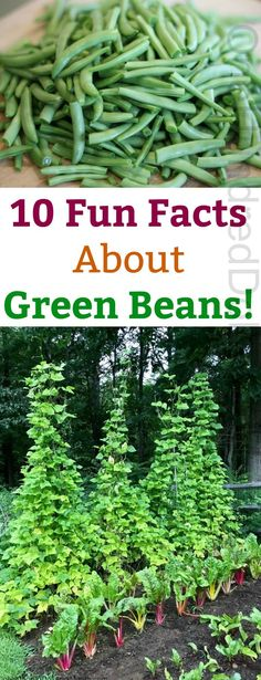 10 Fun Facts About Green Beans! - One Hundred Dollars a Month How To Grow Your Hair Faster, Grow Your Own Food, Growing Gardens, Small Gardens, Container Gardening, Gardening Tips, Kitchen Gardening, Vegetable Gardening, Dilly Beans