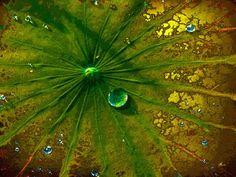 'Leaf Art' von Dirk h. Wendt bei artflakes.com als Poster oder Kunstdruck $16.99