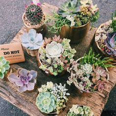 Image in Nature🐾❤🌸 collection by Dennise Hernández Nature Collection, Exterior Design, Outdoor Gardens, Orchids, Outdoor Living, Succulents, Planters, Floral, Flowers
