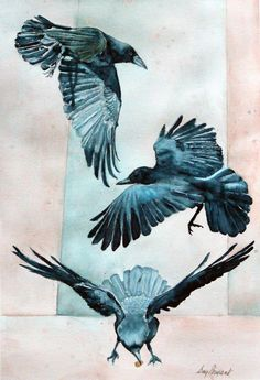 """This is sort of what I picture Tris's tattoo looking like, from Veronica Roth's """"Divergent"""" series - As the Crow Flies, watercolour, Gay Bryant Crow Art, Raven Art, Foto Transfer, Jackdaw, Birds And The Bees, Crows Ravens, Pet Birds, Painting & Drawing, Watercolor Art"""
