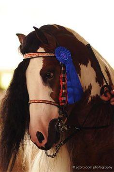 #Westmoreland Farm Gypsy Vanner Horses