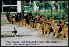 ( I love this photo Line up of Police dogs and a cat ) Some doggies do earn a living. Police dogs in particular. Most Police dogs are Germa. Funny Animal Pictures, Funny Animals, Cute Animals, Dog Pictures, Wild Animals, Animal Pics, Funny Images, Hilarious Pictures, Animals Photos