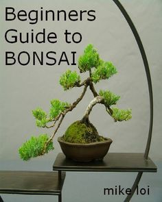 This will help ensure our next bonsai doesn't end up like our last one