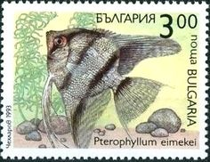Znaczek: Freshwater Angelfish (Pterophyllum eimekei) (Bułgaria) (Flora and fauna) Mi:BG 4052,Yt:BG 3509