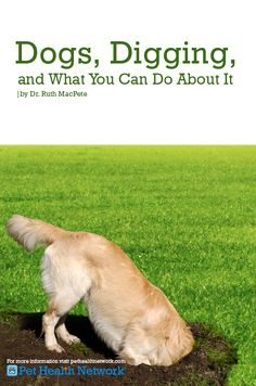 #Dogs, #Digging, and What You Can Do About It by Dr. Ruth MacPete