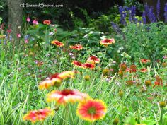 Absolutely love natives...gaillardia is one I have in my garden.