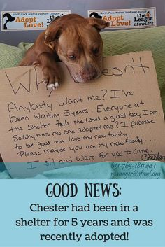 We are happy to hear that this pup has found his forever home! Share Chester's story and read about how PetPlus is helping more pets like Chester get adopted! #pitbullawareness #adoptdontshop #foreverhome