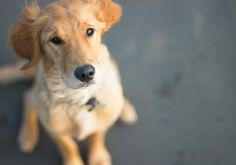 10 jeitos fofos do seu cachorro demonstrar carinho por você