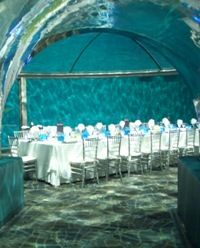having my wedding reception in the dolphin dome at the indianapolis zoo