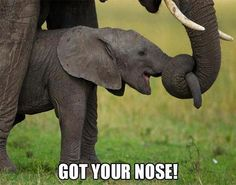 Lol Baby Elephant! Can't stand it!
