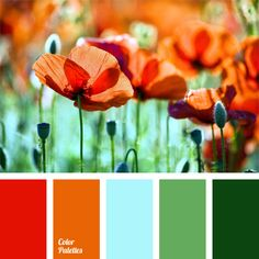 Emerald green and red color of poppies make a striking color scheme. This combination fills any wardrobe with summer shades. Orange adds playfulness, while blue and salad green soften the overall contrast range of shades of the blooming poppy field.