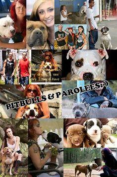 Pibulls & Parolees Pic-collage amazing show every Saturday at 9:00