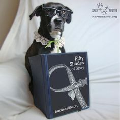 Lola is celebrating World Spay Day 2013 by sharing 50 ways to combat Roverpopulation!