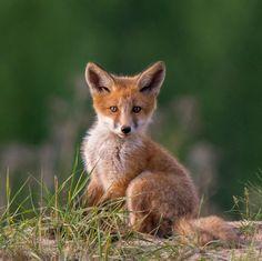 beautiful-wildlife:  FuzzybyMaciej Kozlowski