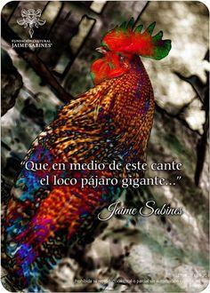 Fotografía 5 Edna De Es