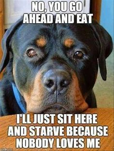 Go on, then....enjoy your tasty meal... #funny #dogs