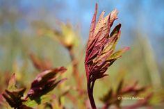 Frühlingsblüher # Farbenreich