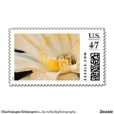 Charlemagne Echinopsis in bloom Stamp