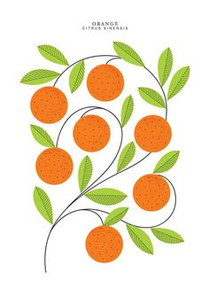 Orange illustration