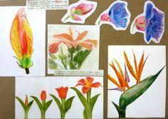 BBC   Blast Art   Design   Lilies