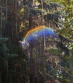 Through The Veil Photograph