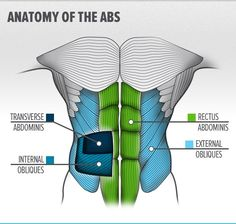 Lose Your Gut In 3 Moves - The rectus abdominis receives all the credit for a well-developed midsection. But there's an underrated star beneath it that can pull your stomach in and enhance your six-pack even more! Six Pack Abs Workout, Abs Workout For Women, Body Muscle Anatomy, Leg Muscles Anatomy, Ab Day, Muscular System, Human Anatomy And Physiology, Medical Anatomy, Core Muscles