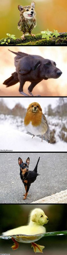 Dog faces on birds~here come the Dirds, a. the Dirdy birds (those last two, LOL! Animals And Pets, Funny Animals, Cute Animals, Funny Cute, Hilarious, Funny Memes, Tierischer Humor, Bizarre, Funny Animal Pictures