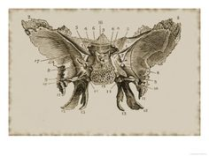 I love the sphenoid complex. It's gorgeous. It looks so much like a tattered but unbroken moth.